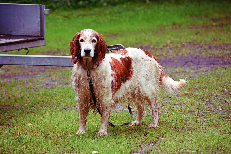 Собака предусматриванная в грязи стоковое изображение