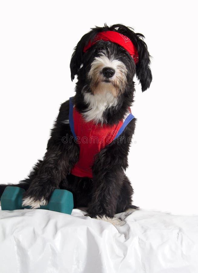 Собака пригодности стоковая фотография rf