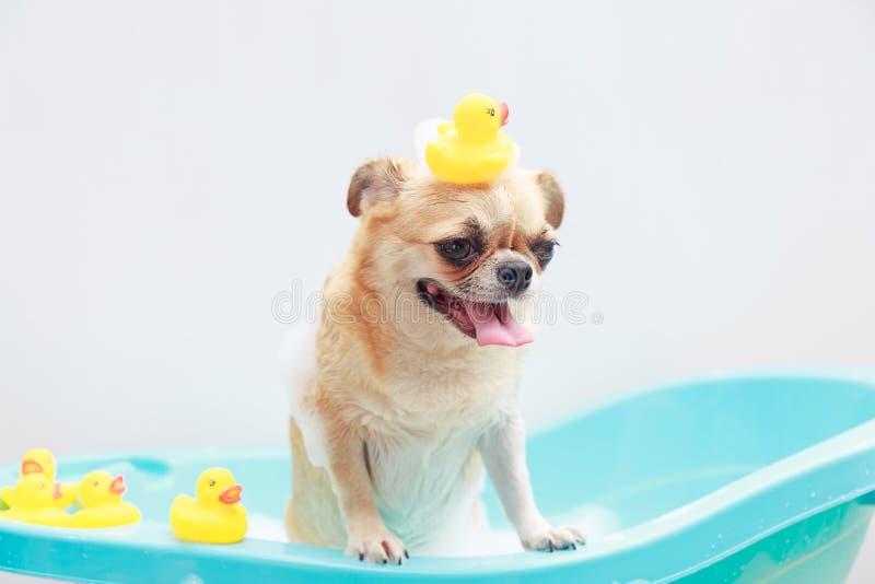 Собака принимая ливень стоковое изображение rf