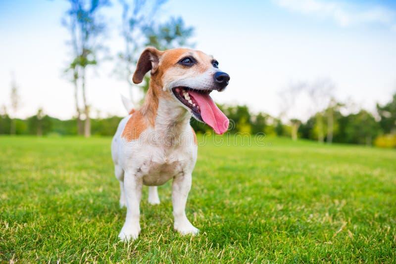 Собака природы свежего воздуха стоковое фото rf