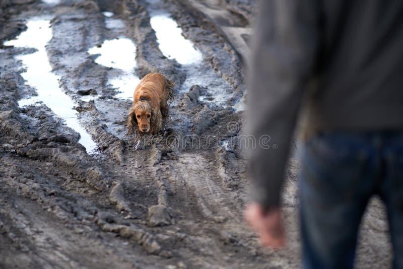 Собака приходит из грязи виновно стоковые изображения rf