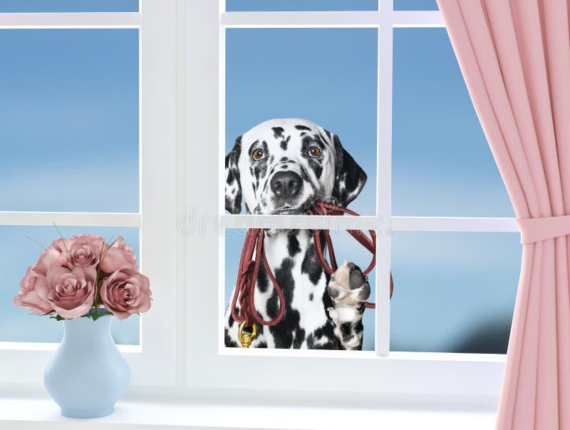 Собака при поводок смотря через окно стоковое изображение rf