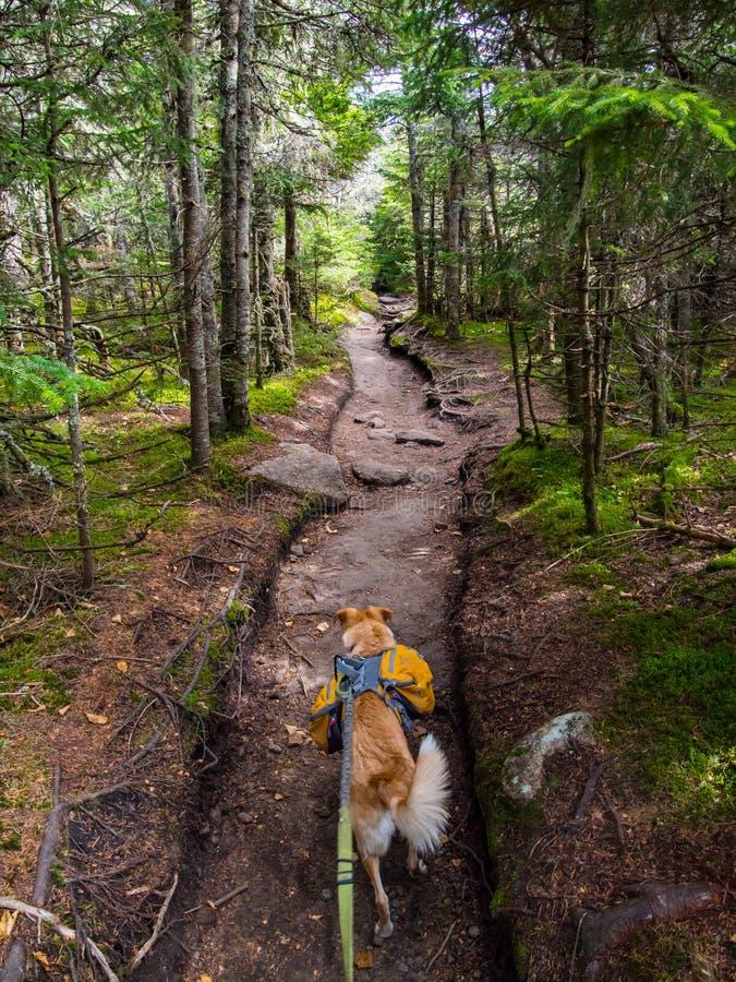 Собака при рюкзак через плотный лес стоковое фото