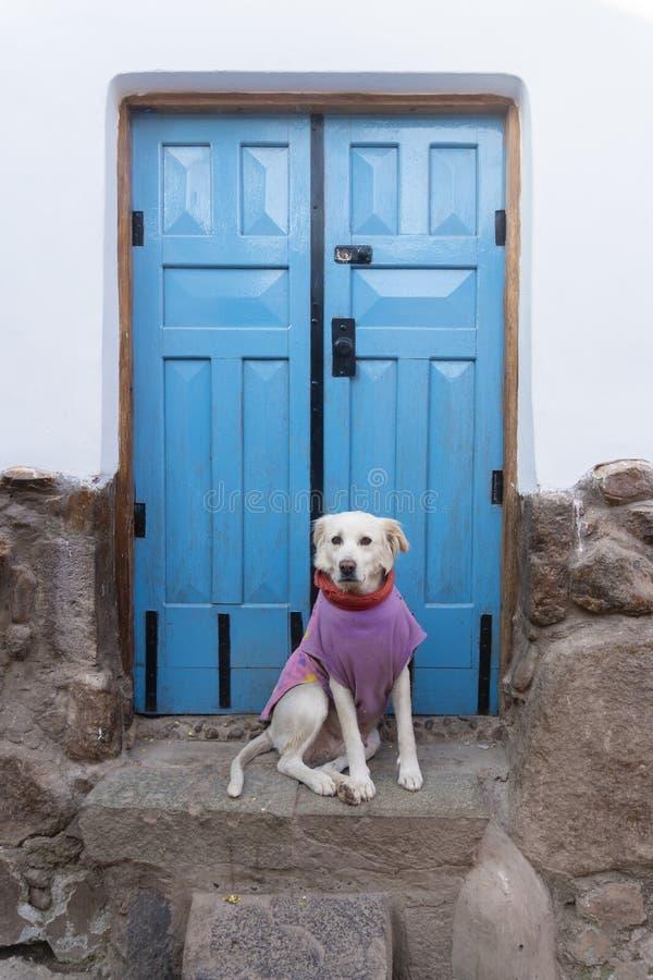 Собака против голубой двери стоковые изображения