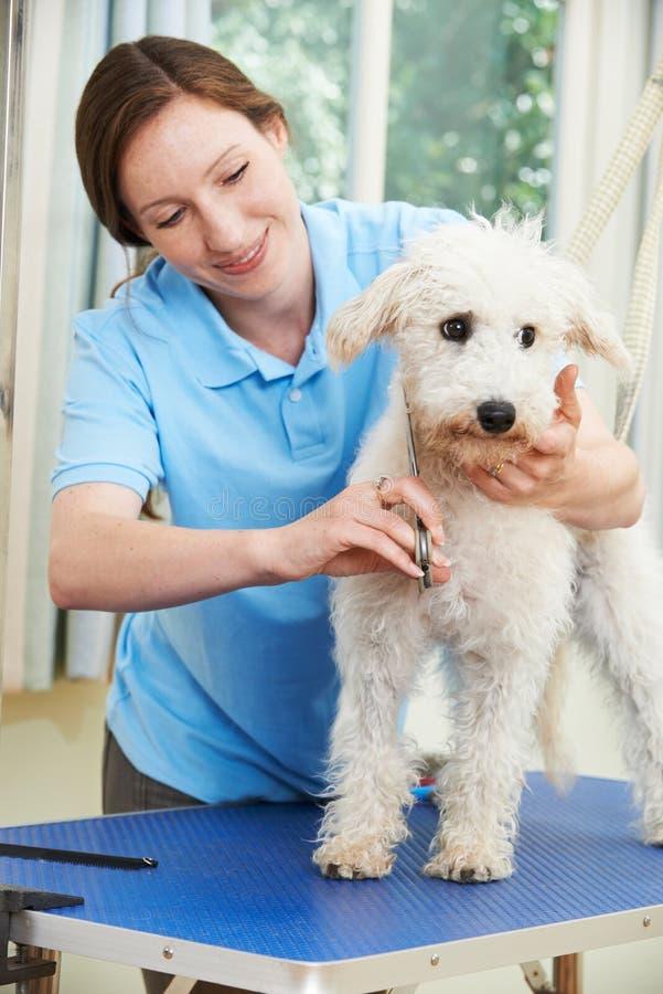 Собака профессионально будучи выхоленным в салоне стоковые фотографии rf