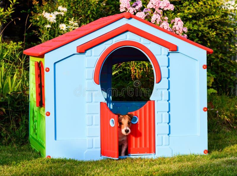 Собака пряча от жаркой погоды в большом доме спортивной площадки на задворк стоковые изображения rf