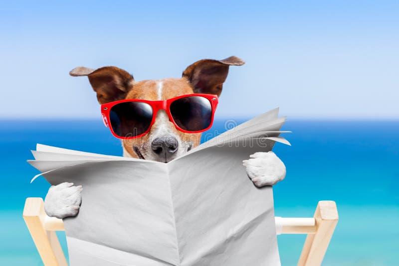 Собака пляжа лета стоковые фотографии rf
