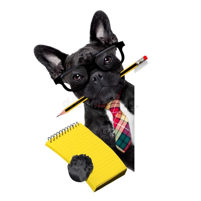 Собака работника офиса стоковые фотографии rf