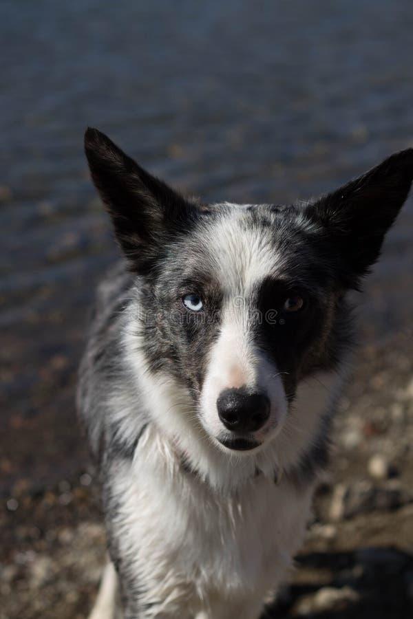 Собака рекой стоковая фотография rf
