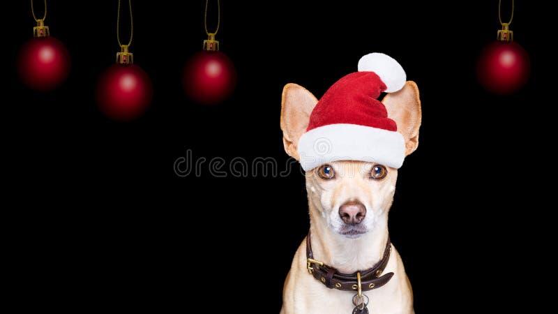 Собака рождества Санта Клауса на черном backgroud стоковое фото rf