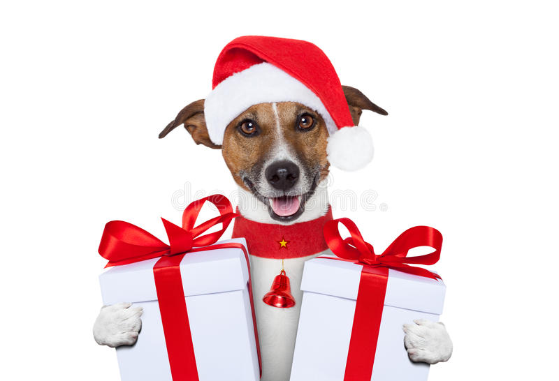 Собака рождества стоковое фото