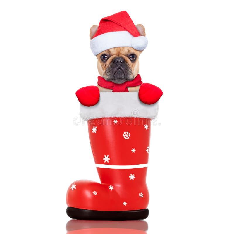 Собака рождества в красном ботинке santa стоковые изображения