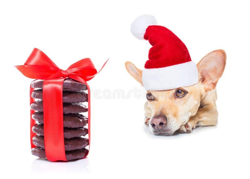 Собака рождества как Санта Клаус стоковые фотографии rf