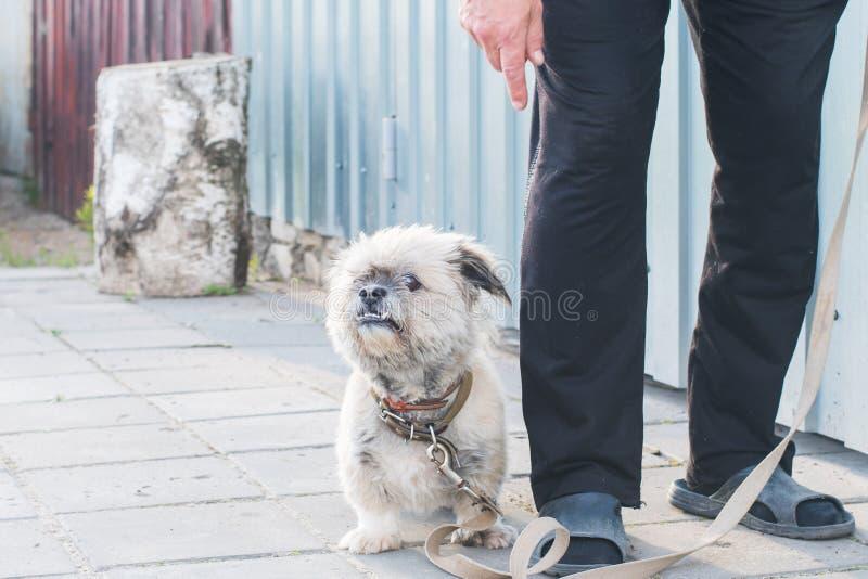 Собака рядом с предпринимателем около дома стоковое изображение
