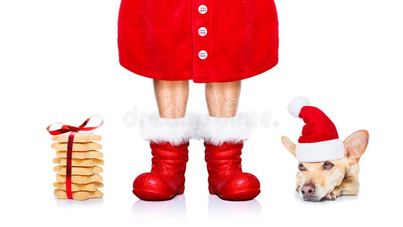Собака Санта Клауса рождества стоковые изображения rf