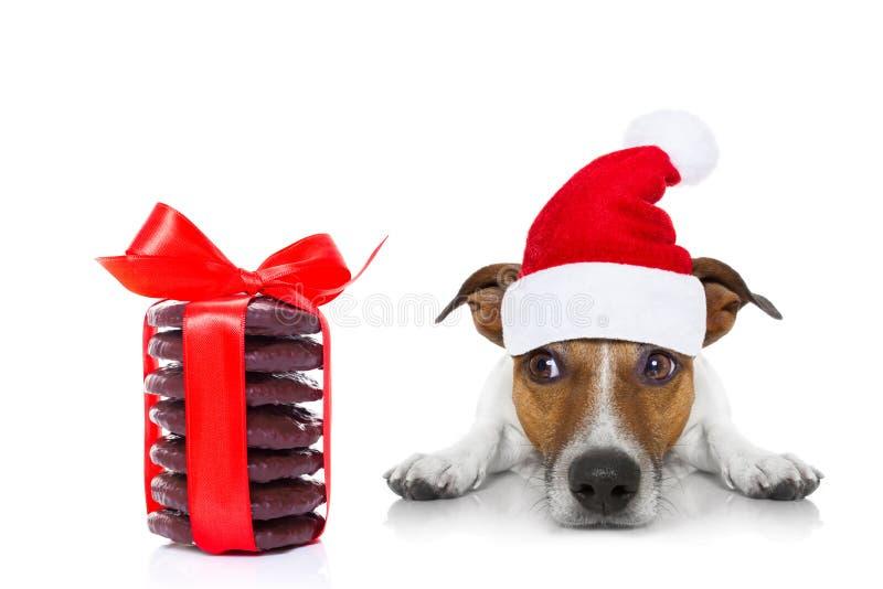 Собака Санты рождества стоковая фотография rf