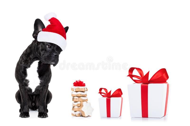 Собака Санты рождества стоковое фото