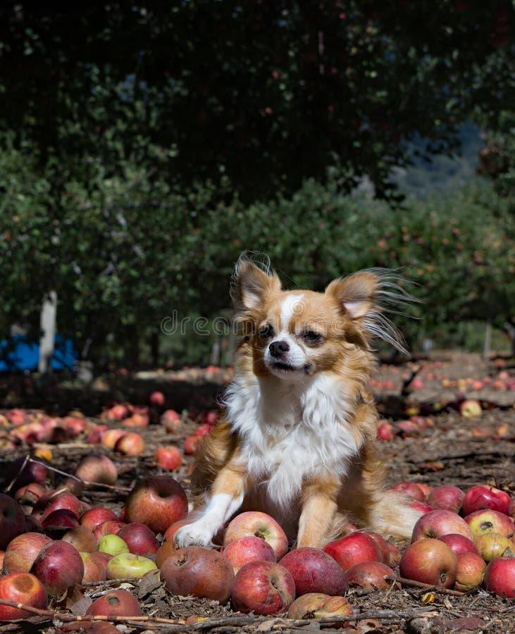Собака сбора стоковое фото rf