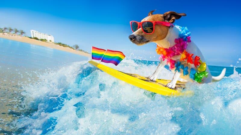 Собака серфера на пляже стоковая фотография rf