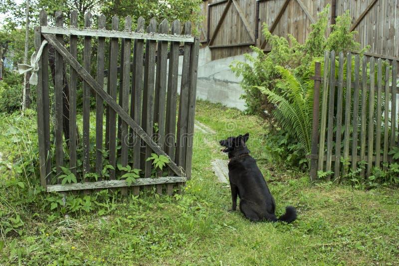 Собака сидит на открытом деревянном стробе и ждет стоковое фото