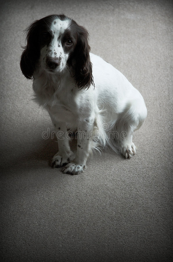 собака сиротливая стоковые фотографии rf