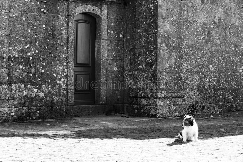 Собака сидя самостоятельно стоковое изображение rf