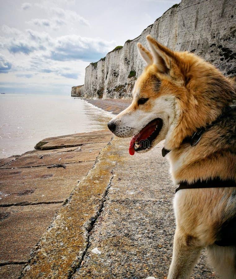Собака скалы стоковые фотографии rf