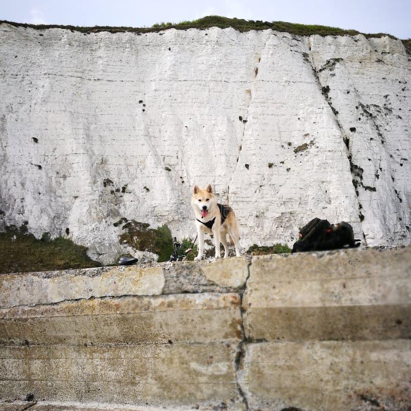 Собака скалы стоковые изображения