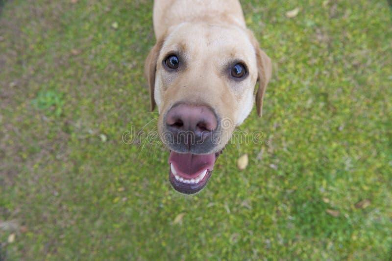 собака смешная стоковое изображение rf