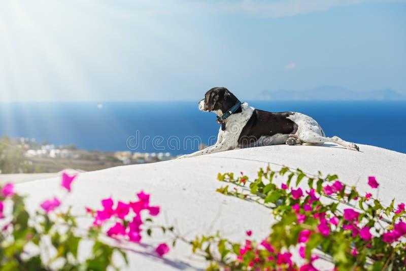 Собака смотрит море стоковое фото rf
