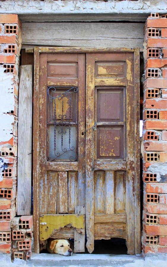 Собака смотрит под дверью стоковая фотография rf
