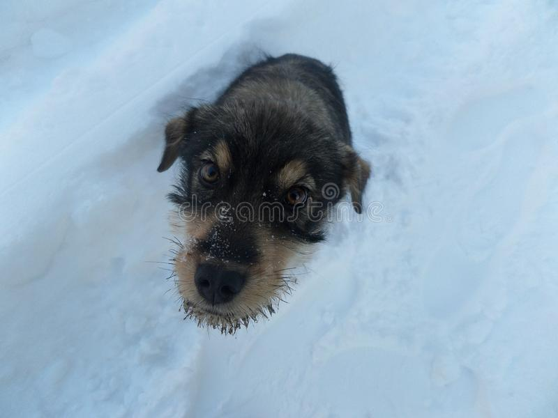 Собака снега зимы стоковые фотографии rf