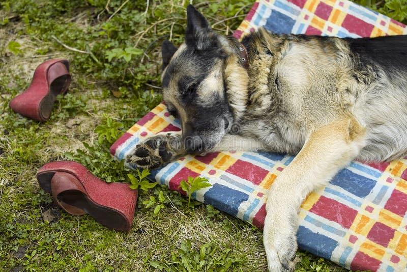 Собака спать на циновке стоковые изображения