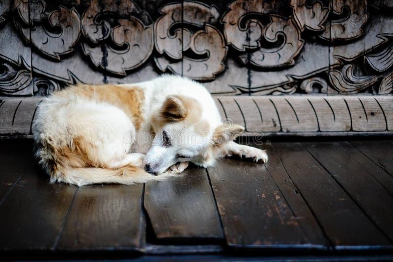 Собака спать перед тайской деревянной скульптурой стоковые изображения rf