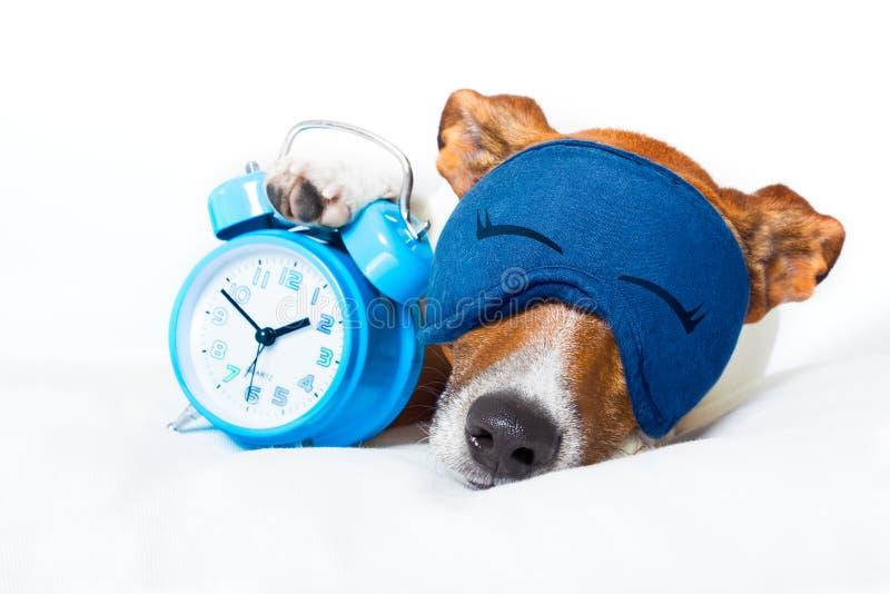 Собака спать с часами стоковые фотографии rf