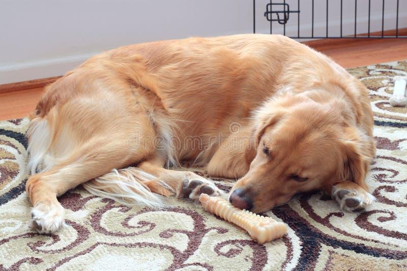 Собака спать стоковое фото rf