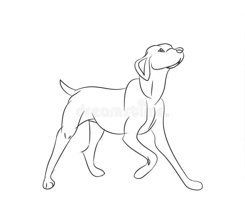 Собака спрашивая, линии, вектор иллюстрация вектора