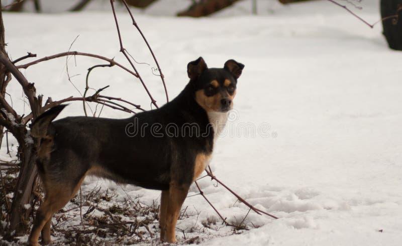 Собака стоит в снеге стоковые фото