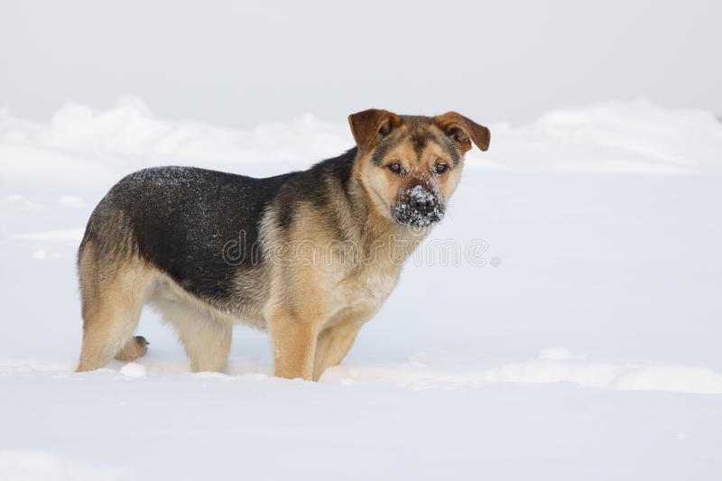 Собака стоя на снежном поле стоковые изображения