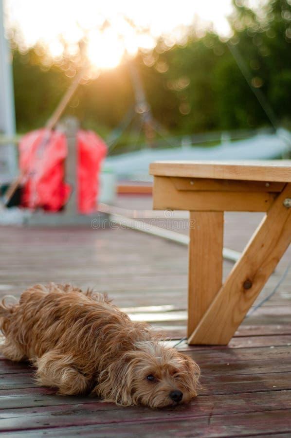собака стыковки коттеджа стоковое изображение
