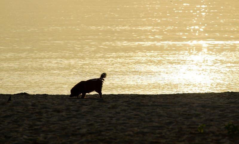 Собака счастливо на пляже стоковое изображение rf