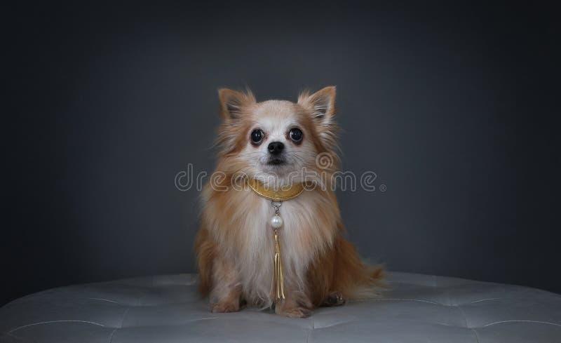 Собака с воротником стоковое изображение