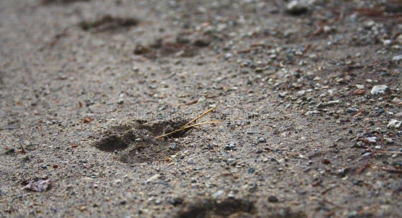 Собака следа на том основании стоковая фотография rf