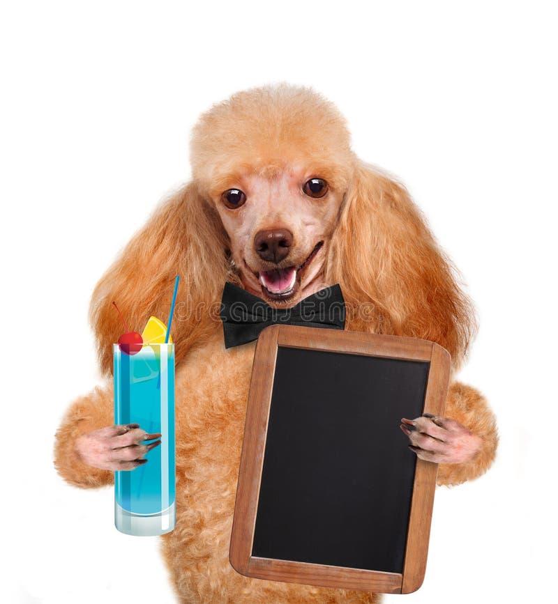 Собака с коктеилем стоковое фото