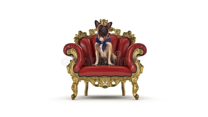 Собака с кроной в стуле стоковые фото