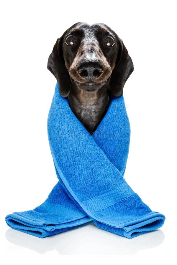 Собака с маской красоты стоковая фотография rf