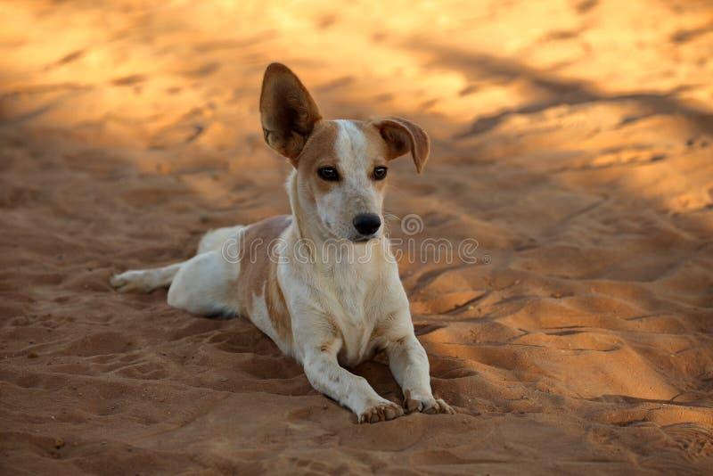 Собака с неповоротливыми ушами стоковое изображение rf
