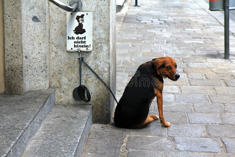 Собака с нет выслеживает позволенный знак стоковая фотография rf
