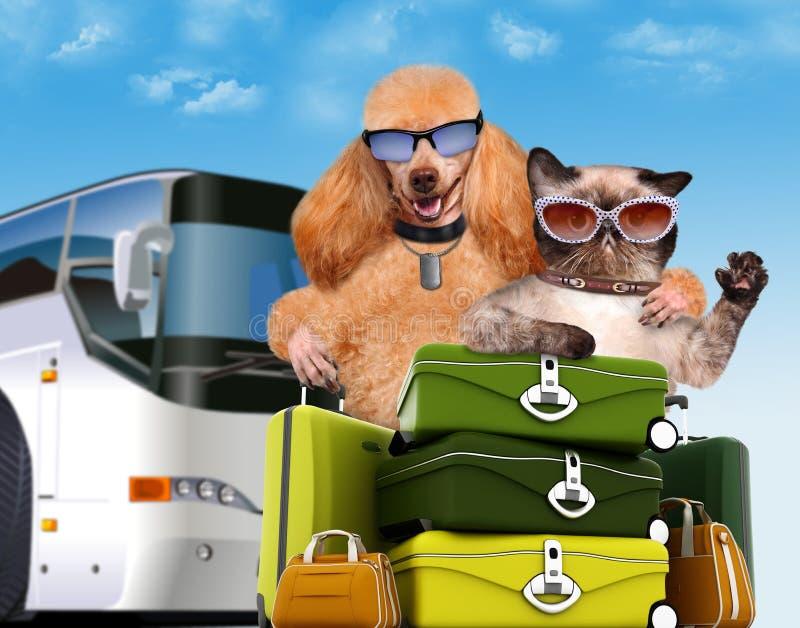Собака с путешественниками кота стоковые изображения