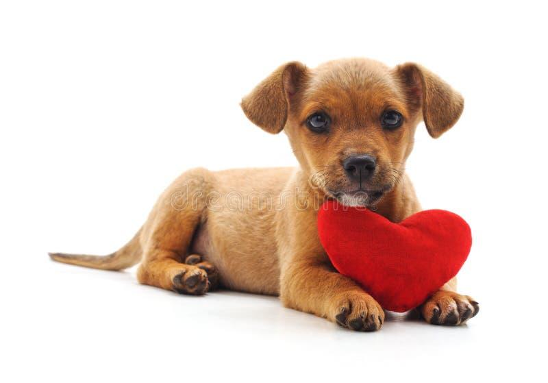 Собака с сердцем стоковые изображения rf